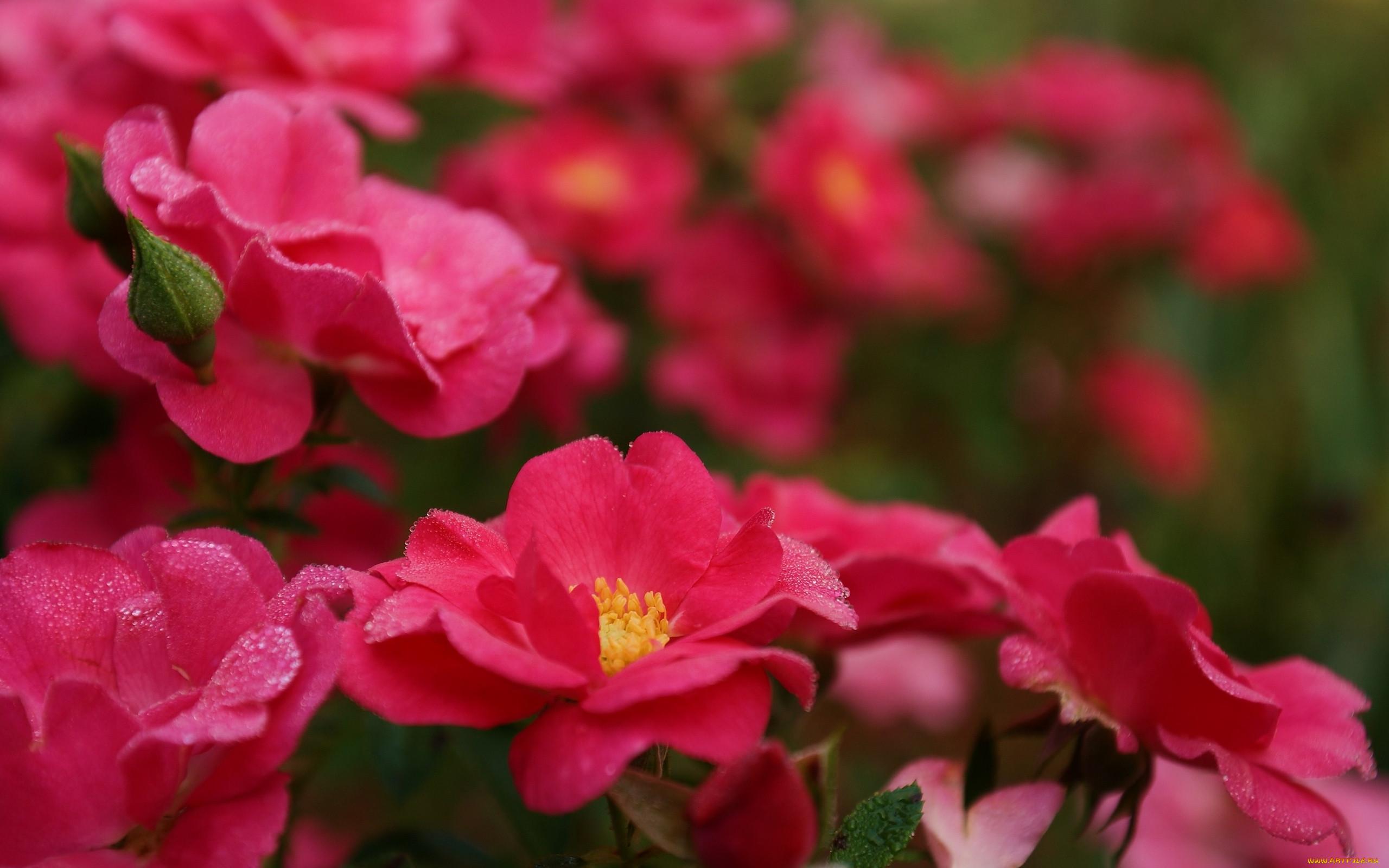 Красивые живые цветы фото